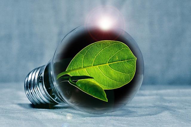Grünes Blatt in Glühbirne.